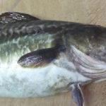 真鱈の味噌汁~笹川流れ