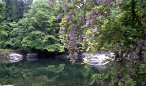 月不見の池(つきみずのいけ)