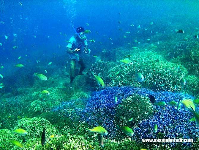 Paket Snorkling Gili Layar Lombok