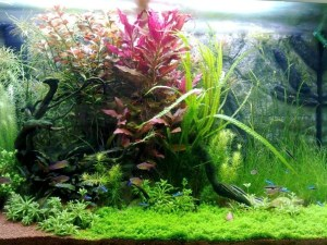Planted aquarium set up aquarium services