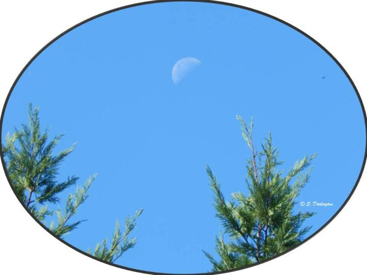 moon-in-the-afternoon