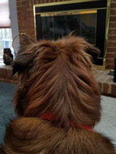sophie stella lap dog