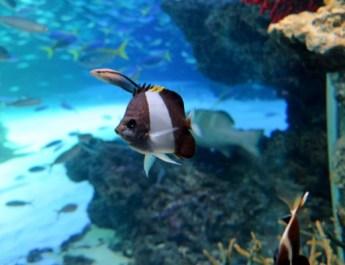全問正解間違いなし!九十九島パールシーリゾート海きららで「お魚漢字クイズ」