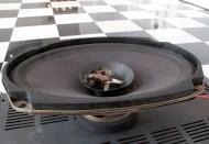 VICE VERSA. The bird unit: speaker, amplifier, dead bird's head.