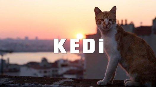 """2018-07-13: KINO KĘPA na dachu: """"KEDI – sekretne życie kotów"""""""