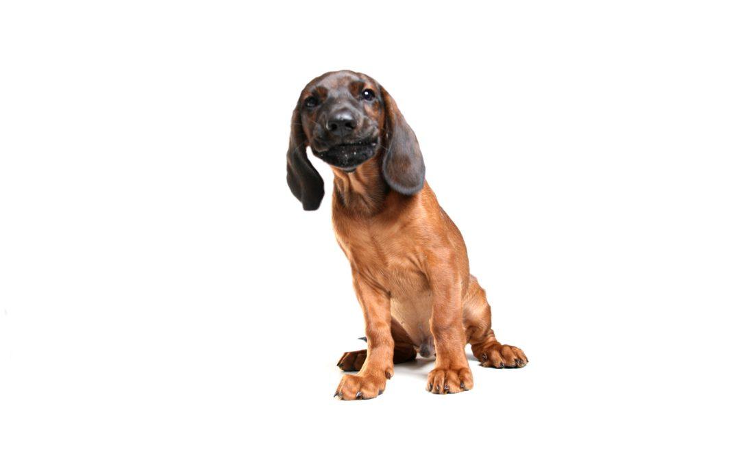 2018-02-10: Rada Warszawy uchwaliła nowe zasady wyprowadzania psów na spacer