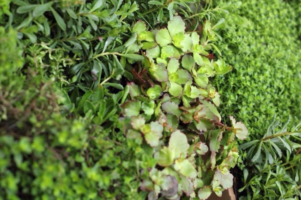 2018-05-12: Jakie rośliny mogą pomóc w walce ze smogiem?