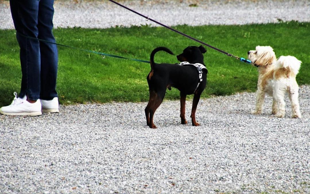 2019-01-01: zmiany w Regulaminie utrzymania czystości i porządku na terenie m.st. Warszawy, dotyczące psów