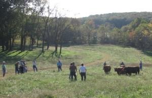 Pasture Walk at Sassafras Valley Ranch