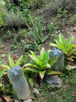 Each plant outside the San Javier library represents a person who disappeared during the military interventions in Comuna 13 in the early 2000s.