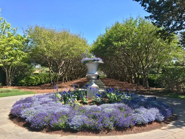 Dallas arboretum blue flowers
