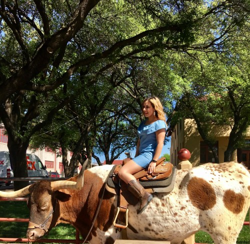Fort Worth Stockyards longhorn