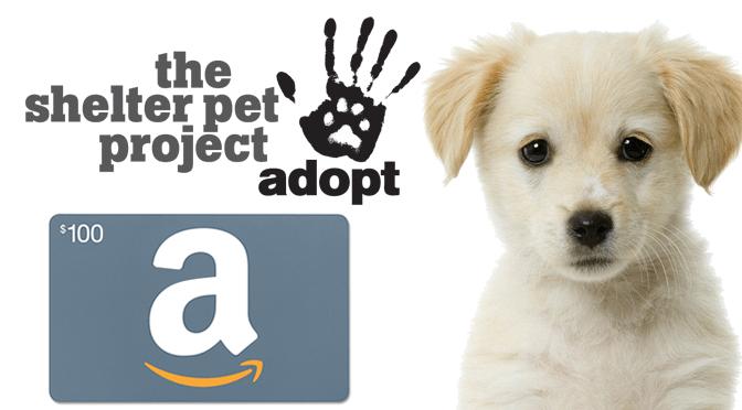 shelter pets giveaway