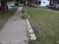 Edge of sidewalk gets the mulch treatment