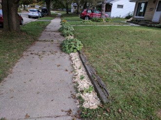 Edge of sidewalk gets the mulch treatment