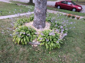 Tree base with mulch