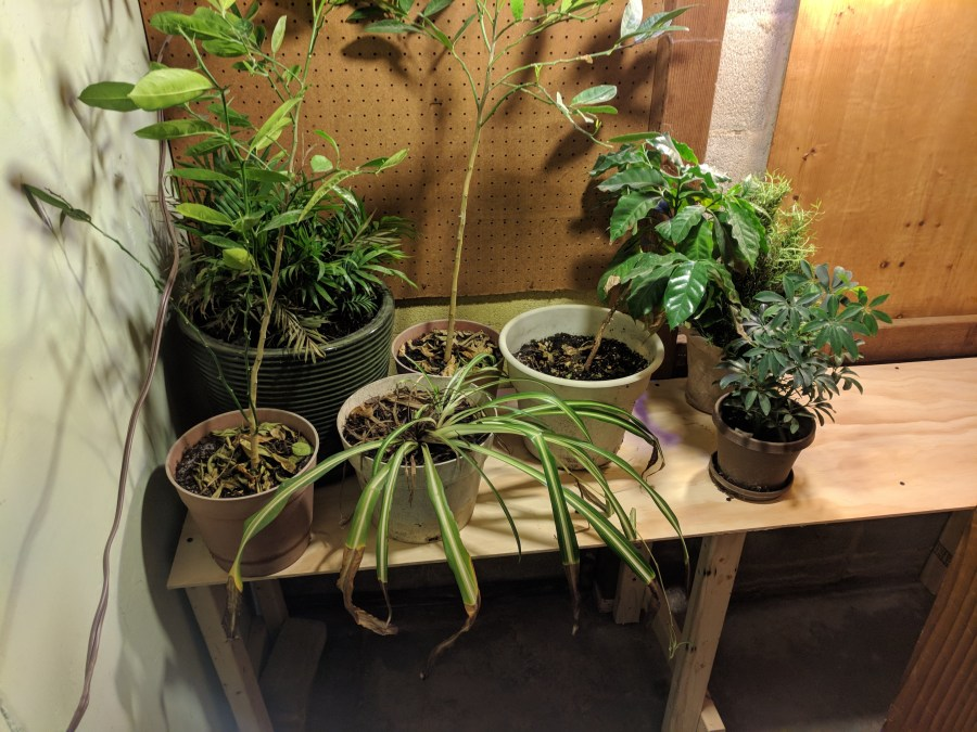 Grow area with plants