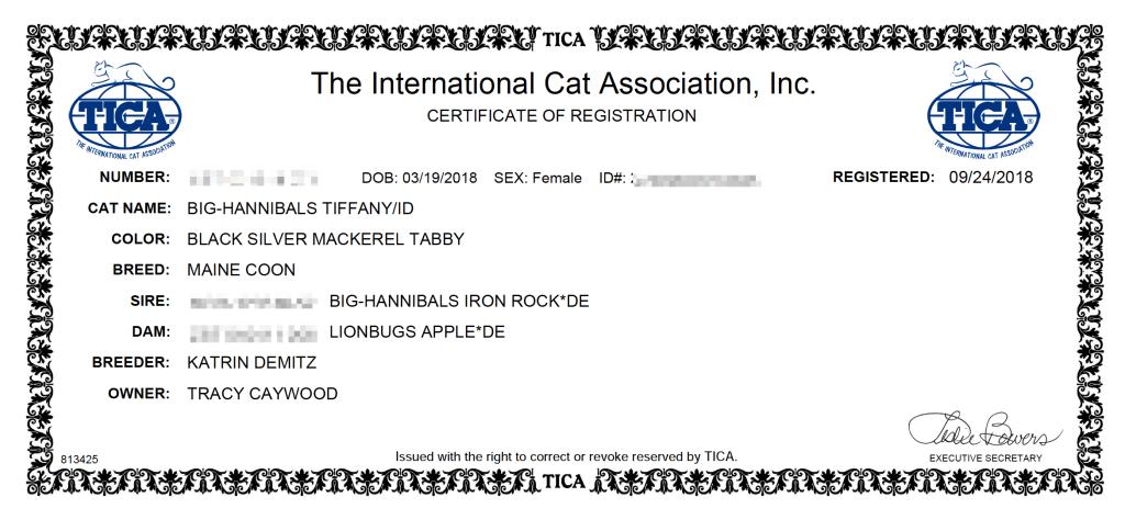 tica registration maine coon