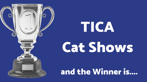 TICA Cat Shows – Are they Biased Toward Certain Colors?