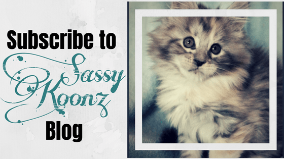 maine coon blog