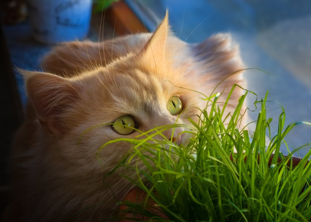 poisonous plants to cats