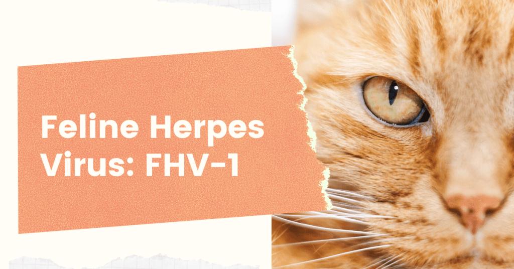 feline-herpes