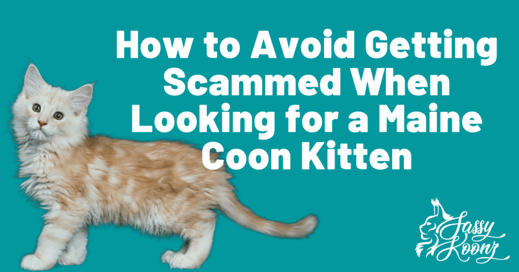 How to avoid getting scammed kitten