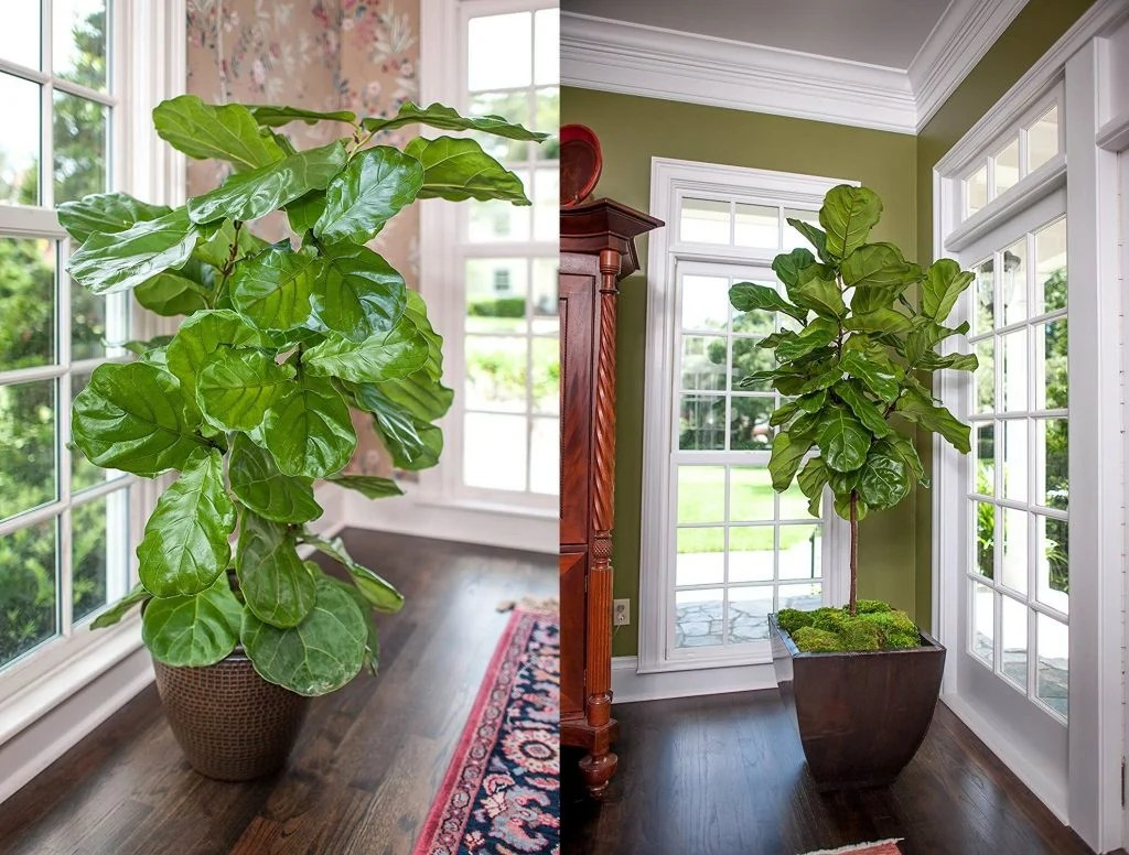 20 Most Beautiful Houseplants You Need To Know About