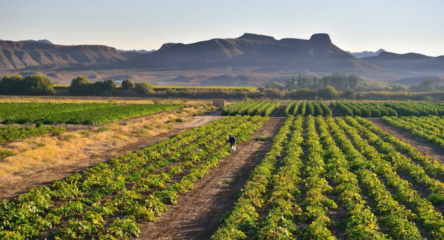 Amid the economic gloom of the coronavirus disaster and associated GDP plunge, one sector is shining bright. Much of the agricultural sector is positively booming, following bumper summer crops and with early indications that the winter season could also deliver strong growth.