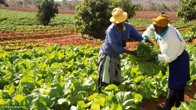 Community gardeners and small-scale farmers can get up to R9,000 from govt – here's how