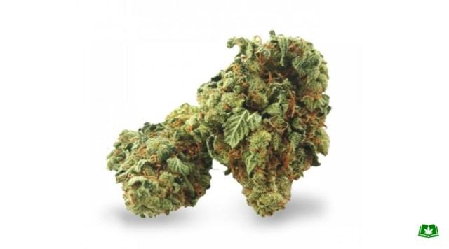 Florida Medical Marijuana - Super Silver Haze