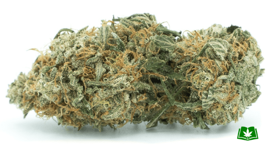 Blue Cheese Strain (Buy Online) | Side Effects, Grow Tips & More