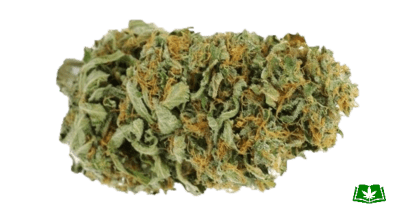 Amnesia Haze Strain (Buy Online) | Side Effects, Grow Tips & More