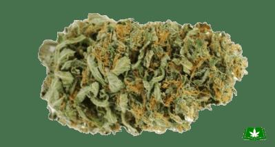 Amnesia Haze Strain (Buy Online) | Side Effects, Grow Tips & More