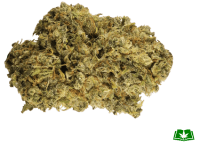 Durban Poison Strain (Buy Online) | Side Effects, Grow Tips & More
