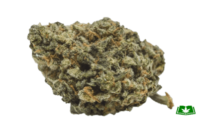 Maui Wowie Strain (Buy Online) | Side Effects, Grow Tips & More