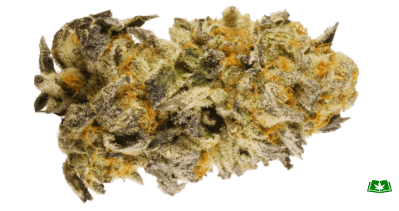 Platinum GSC Strain (Buy Online) | Side Effects, Grow Tips & More