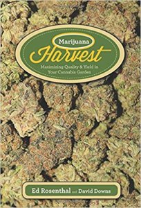 Marijuana Harvest: How to Maximize Quality and Yield in Your Cannabis Garden