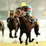 【2016年6月⑤】JRA競走馬歴代賞金ランキング!獲得賞金の多い馬は?第41位~第50位発表!