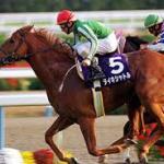 【2016年6月⑥】JRA競走馬歴代賞金ランキング!獲得賞金の多い馬は?第51位~第60位発表!