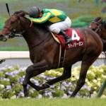 【悲報】日本で全く勝てなくなったディープ牡馬、続々と低レベル豪州へ逃亡www