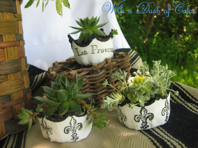 Plants & Flowers Projects - French Peat Pots with Succulents by With a Dash of Color