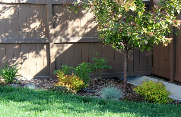 Stained Cedar Fence with Tugboat by Behr
