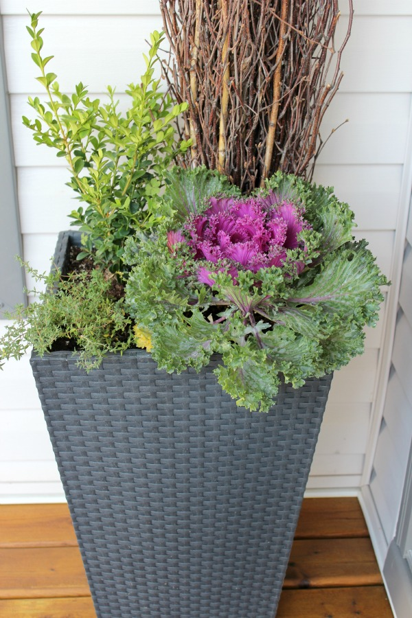 Tall Grey Fall Planter With Boxwood, Ornamental Kale and Thyme
