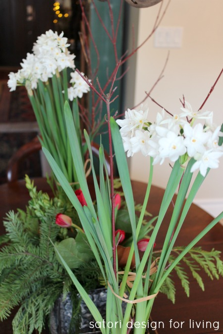 Plant narcissus bulbs 8 weeks before Christmas for gorgeous blooms by the big day!