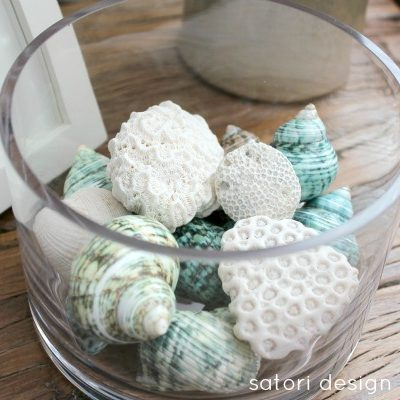 Sea Shells and Coral in Glass Cylinder