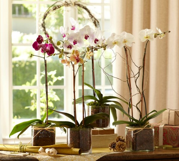 How to Decorate Glass Vases with Different Things - Potted Orchids - Pottery Barn