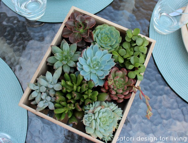Outdoor Table Setting Ideas - Succulents in Wood Box as Centerpiece - Satori Design for Living