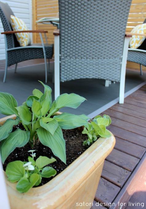 Hosta and Begonia in Yellow Glazed Planter - Satori Design for Living