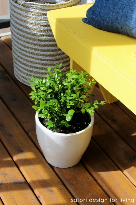 Front Porch Decorating - Yellow Bench with Green and White Potted Boxwood - Satori Design for Living